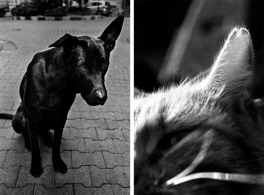 Jehsong Baak, Cats and dogs live well in Istanbul, 1999, Will You Still Love Me Tomorrow 2019