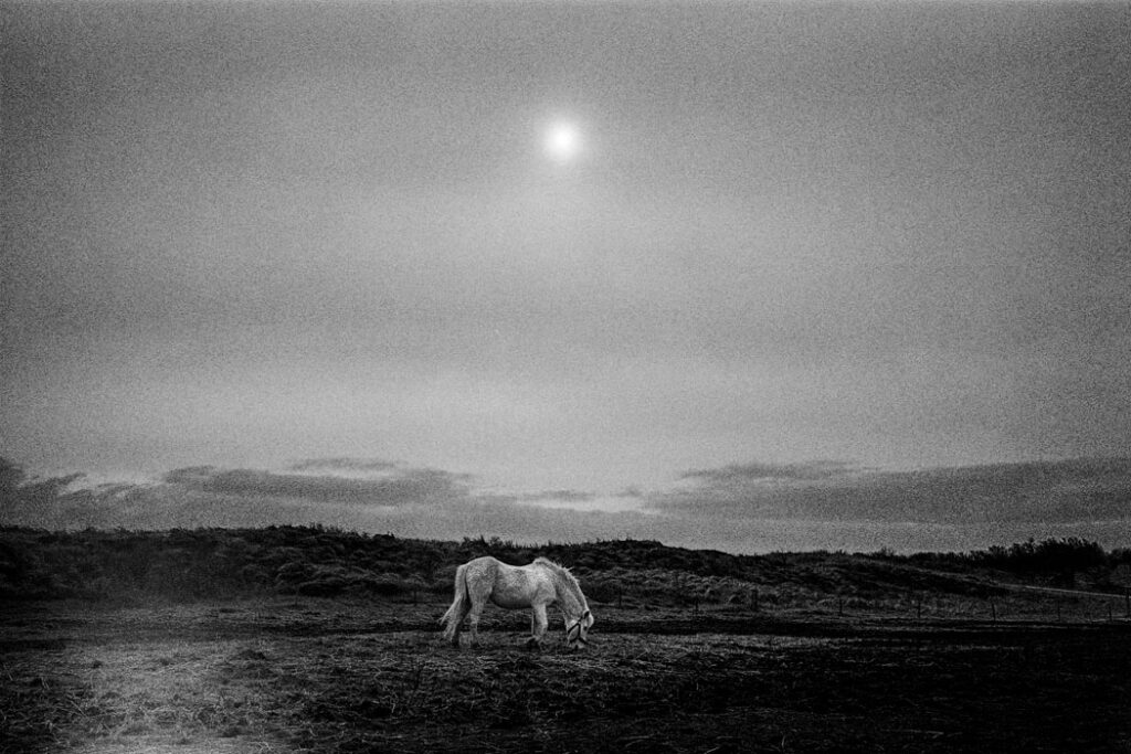 Jehsong Baak, Horse in a field 2005, Schiermonnikoog 2005