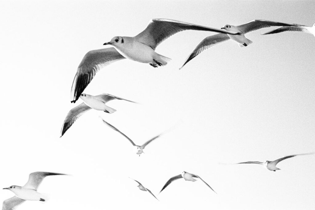 Jehsong Baak, Seagulls looking for breakfast 2019, Will You Still Love Me Tomorrow 2019