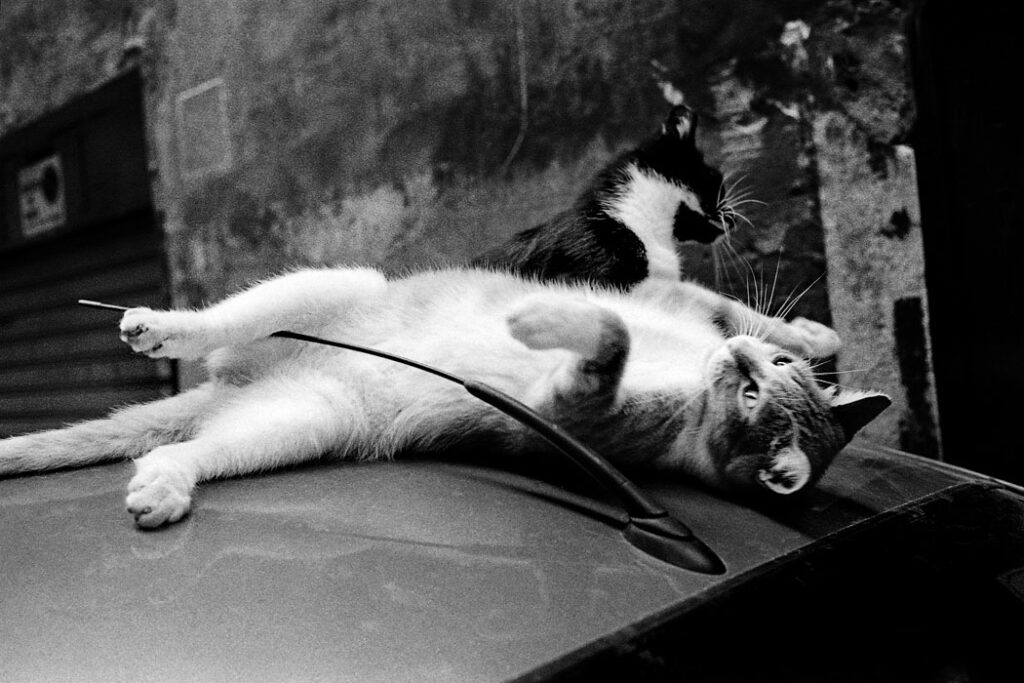 Jehsong Baak, Two cats on a car, Rome 1999