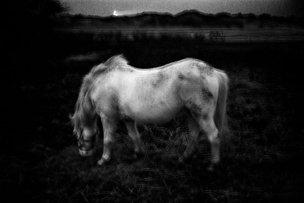 Jehsong Baak, White horse 2005, Schiermonnikoog 2005