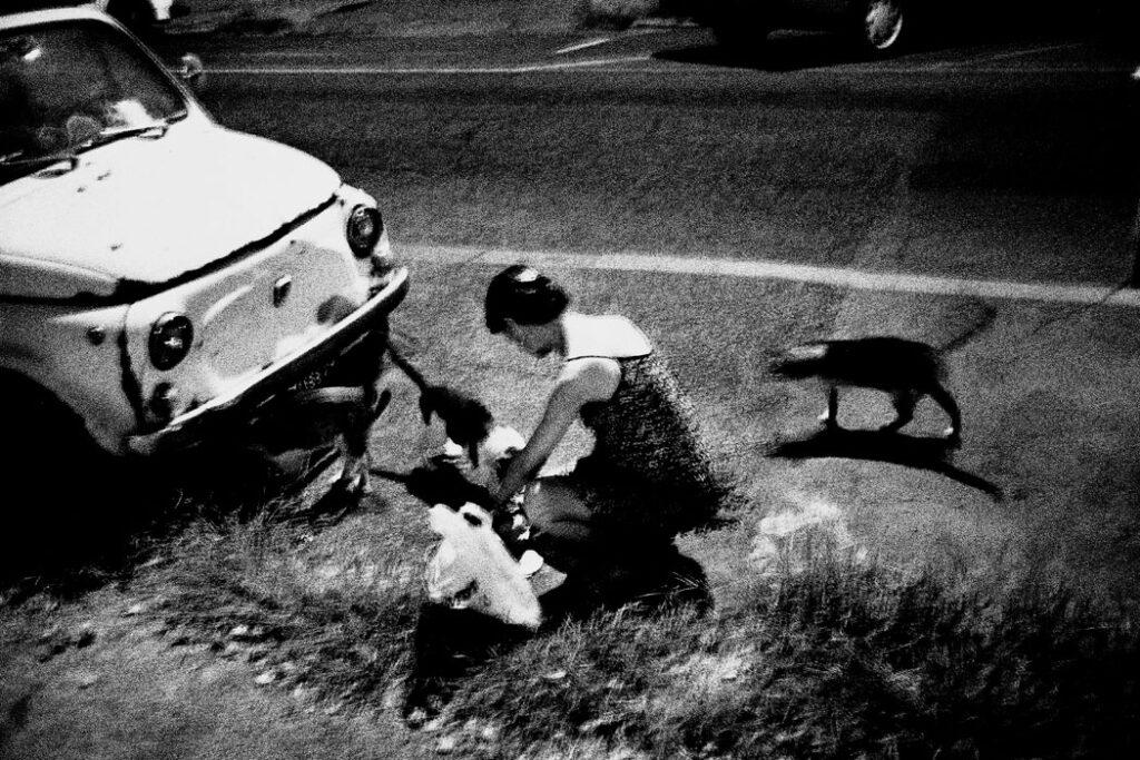 Jehsong Baak, Woman feeding cats, Rome 1999, Là ou Ailleurs